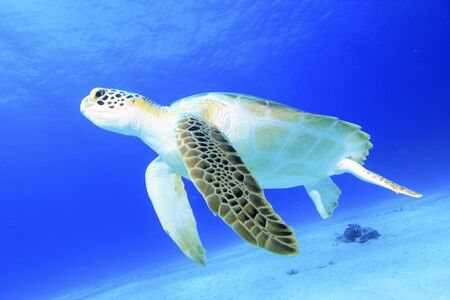 Green Turtle Stock Photo - 3550100