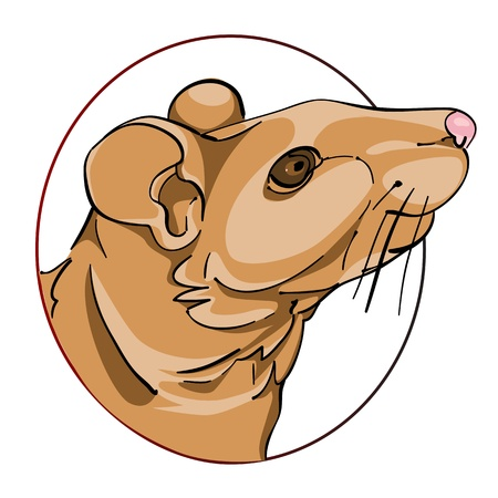 rat head in a circle, chinese zodiac sign isolated on white Vector