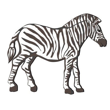 Hand drawn illustration of a zebra with tassel tail, cartoon over white Stock Vector - 17553191