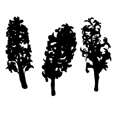 Hyacinth flower silhouettes isolated on white Vector