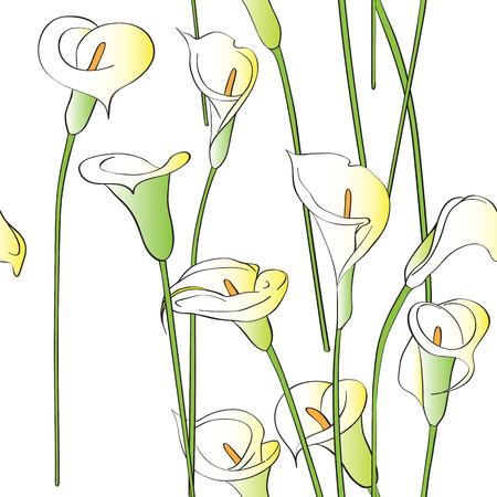 Calla asymmetrical pattern, celebration invitation card on a white background Stock Photo