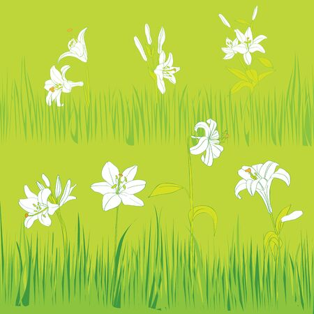 lilium: Lilies garden card, hand drawn illustration of white flowers and grass on a green tile background