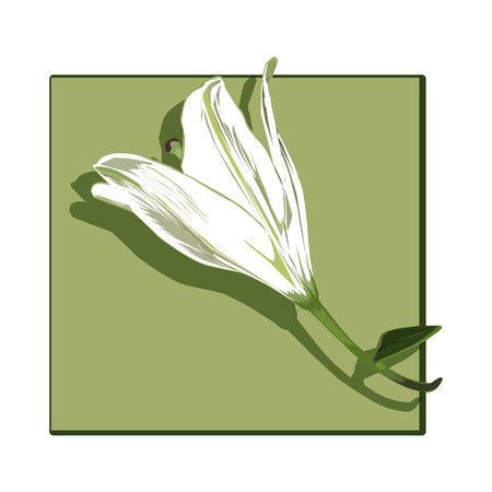 green board: Lily profile clip art isolated on white, drawing of a flower with shadow over a green board