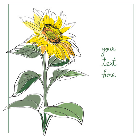 Sunflower card illustration, one element composition with simple frame over white