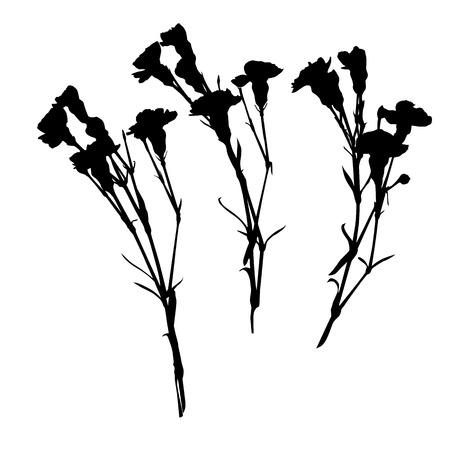 three objects: Carnation silhouettes, three objects isolated on white