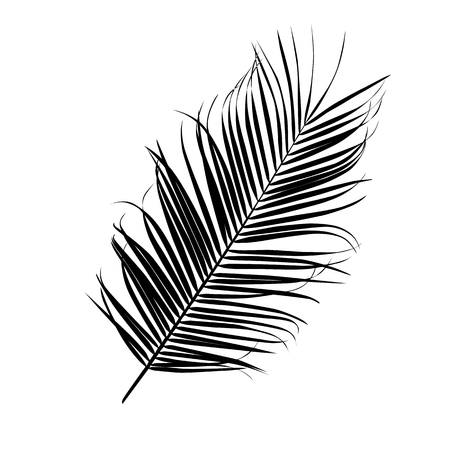 Silhouette of a palm leaf isolated on white