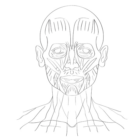 front of the eye: illustration of the face muscles isolated on white, artistic anatomy graphic study Illustration