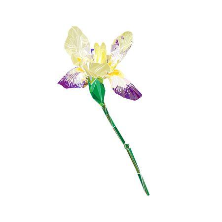 iris flower: Stylized iris flower illustation isolated on white Illustration