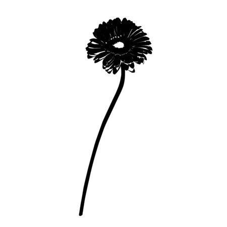 gerbera: Gerbera stencil silhouette isolated on white