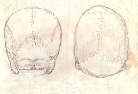 occipital: Hand drawn illustration of a human skull, back and above view, original artistic sketch over an obsolete torn paper with spots