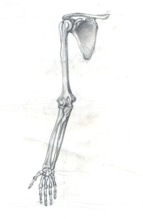 Hand drawn illustration of a part of the human skeleton, the bones of the arm, original artistic pencil sketch on obsolete paper with spots, front view