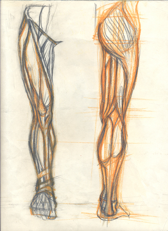 Hand drawn illustration of the leg muscles, original artistic anatomy graphic sketckes over an obsolete paper with spots, front and back view