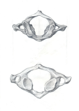 Hand drawn illustrations of atlas vertebra, original pencil drawings over paper, above and below view