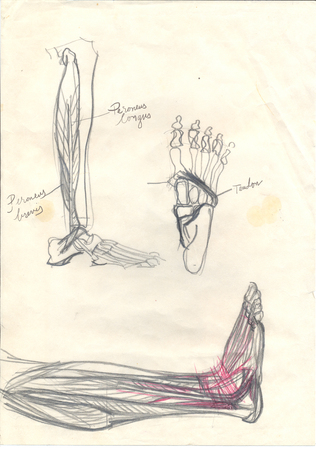 tarsal: Hand drawn iilustration of feet, pencil doodles with text addnotations over an obsolete paper with spots