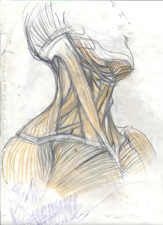 Disegnata a mano illustrazione colorata dei muscoli del collo, schizzo sgangherata grafico di anatomia artistica originale su una carta obsoleta con macchie e scarabocchi, vista laterale Archivio Fotografico - 81898181
