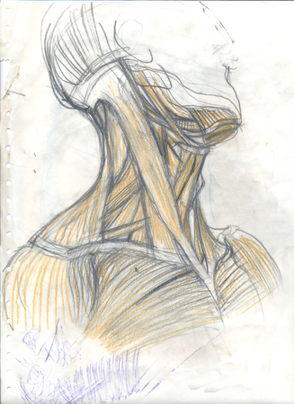 Hand drawn colored illustration of the neck muscles, original artistic anatomy graphic grungy sketch over an obsolete paper with spots and doodles, lateral view