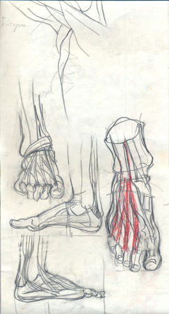 tarsal: Hand drawn anatomy doodles and text, pencil drawing iilustrations of feets over obsolete paper with spots Stock Photo