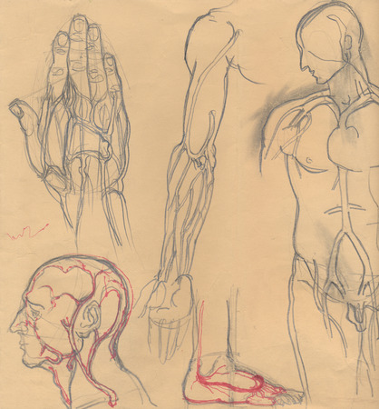 medical drawing: Hand drawn illustrations of different human body parts emphasizing the blood vessels, artistic anatomy graphic sketches on obsolete light brown paper Stock Photo