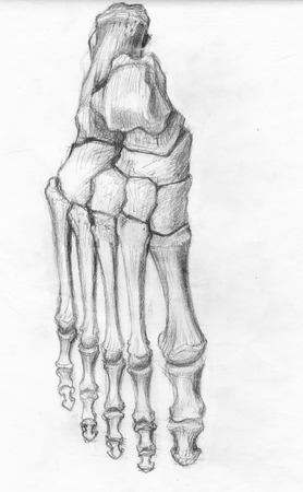 Above frontal view of foot bones, hand drawn artistic original sketch over paper 免版税图像