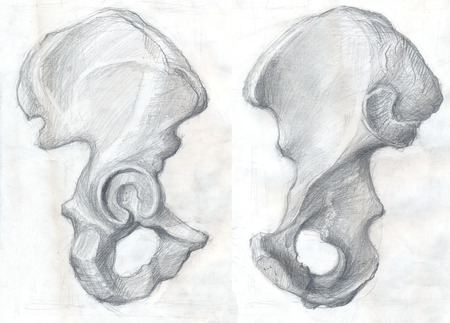Hand drawn illustrations of the hip bone, original artistic pencil sketches on obsolete paper with spots, lateral and ventral view