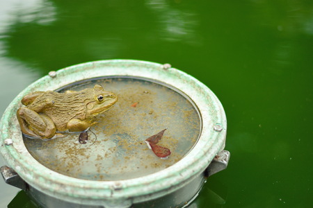 a Frog in the Pond Stock Photo