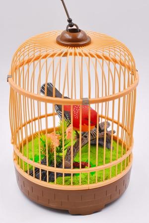 Baby Bird Cage Stock Photo