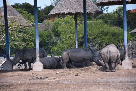 a family of rhinos in the zoo , thailand