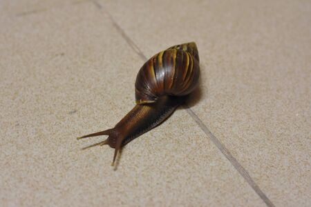 a big snail on the floor
