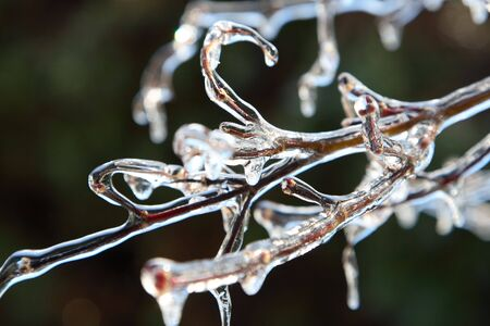icicles: Icicles