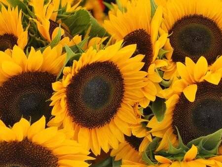 wild sunflowers growing on the side of the road Imagens