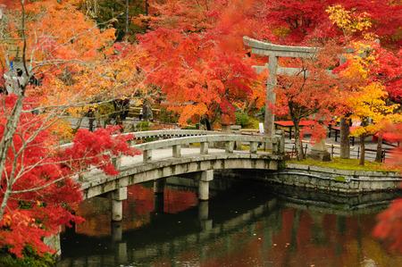 autumn foliage at Eikando Temple in Kyoto, Japan photo