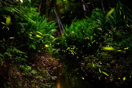 fireflies in the bush by stream 版權商用圖片