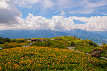 fulvous: Daylily flowers on a hill in Taiwan Stock Photo