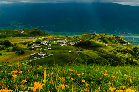 daylily: Daylily flowers on a hill in Taiwan Stock Photo