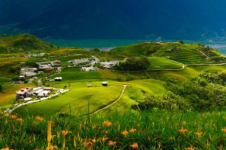 台湾の丘の上のカンゾウの花