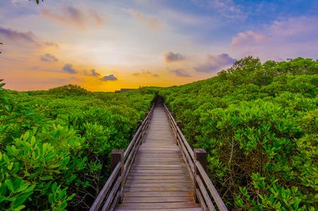 selva: El bosque de mangle con forma Walk madera
