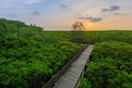 木の散歩道とマングローブ林