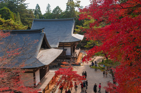 japanese temple: japanese temple in autumn