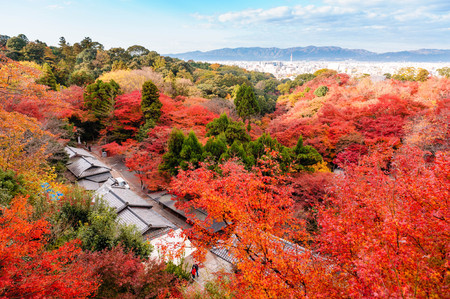 autumn garden: Japanese garden with autumn colored leaves Editorial