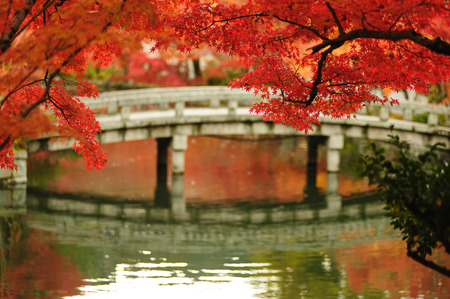 ponte giapponese: autunno fogliame Eikando Tempio a Kyoto, in Giappone