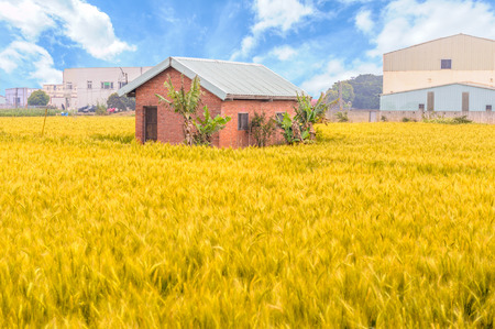 brick house on ripe wheat field