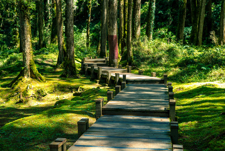 ali: wooden walkway in the forest