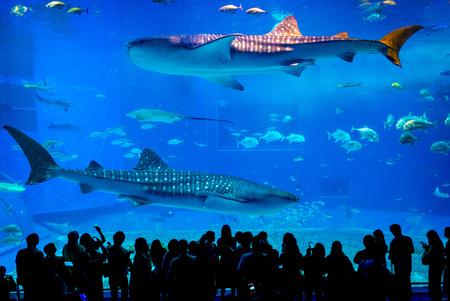 Kuroshio Sea Hauptbecken in Okinawa Churaumi Aquarium Standard-Bild - 79723694