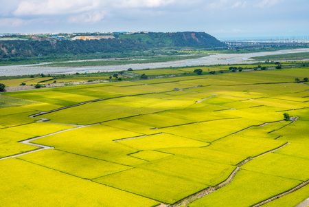 Rice field of Lotus valley in Waipu, Taichung, Taiwan Foto de archivo