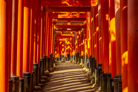 torii path in  japan Standard-Bild
