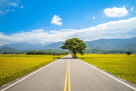 bishop wood on Brown Avenue, Chishang, Taitung, Taiwan 写真素材