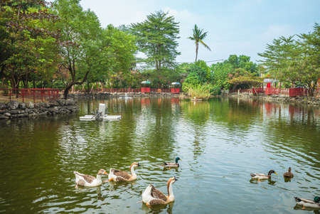 Carp pond of Nanzhou Tourism Sugar Factory in Pingtung, Taiwan 新聞圖片