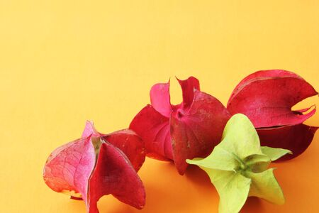 A background theme with dried gooseberry hand painted in red and yellow on an orange background