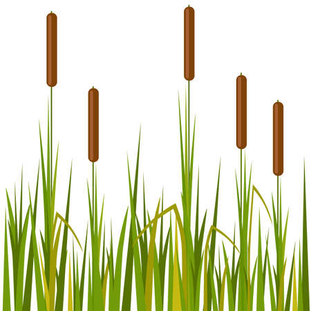 Vector isolated beautiful reed