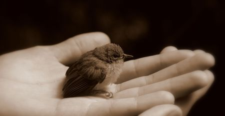 Bird in hand (black and white) Standard-Bild